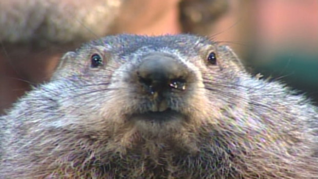 Bleary-Eyed Groundhog Tells Us What We Already Know