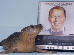 "Fridays Are For Frank: ""Sand and Sea"" (Special Hoboken Seal Edition)"