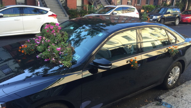 UPDATED: Flowers on Bloomfield Street Trashed by Vandals