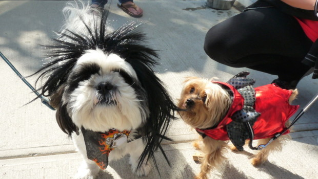 P.I. Paws Howl-O-Ween Event for Liberty Humane Society — Saturday, October 24