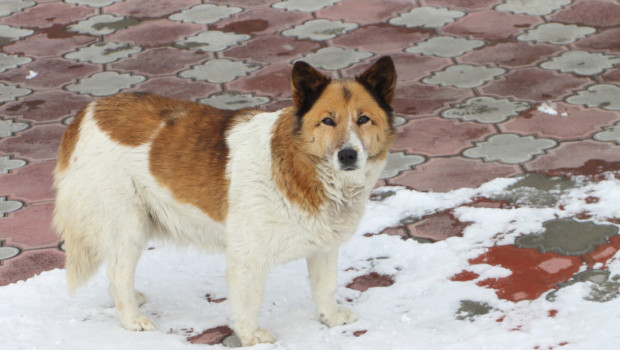 AGONY OF THE FEET: Trusty Tails Looks at Pet-Friendly Ice Melt