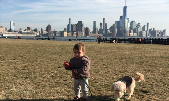 RUFF CROWD: Responding to Complaints, Hoboken Police Issue Tickets for Dogs on Grass