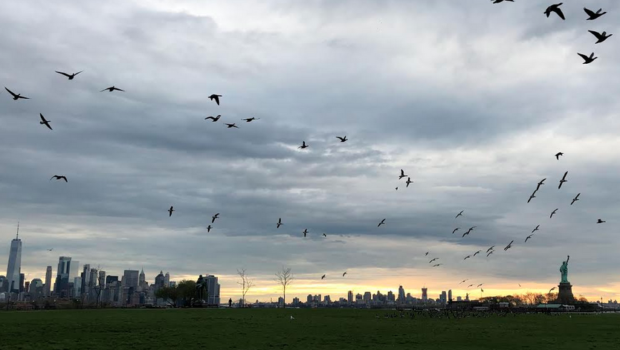 ALL ABOUT THE BIRDIES: Rally at Liberty State Park to Oppose Golf Club Expansion Into Bird Sanctuary—SATURDAY, JANUARY 11 @ 11:00 a.m.